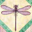 Dragonfly Four