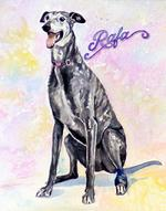 greyhound, watercolor