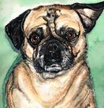 Pug Watercolor