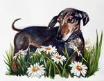 watercolor of dachshund