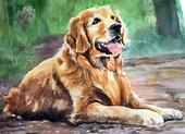 Golden Retriever Watercolor